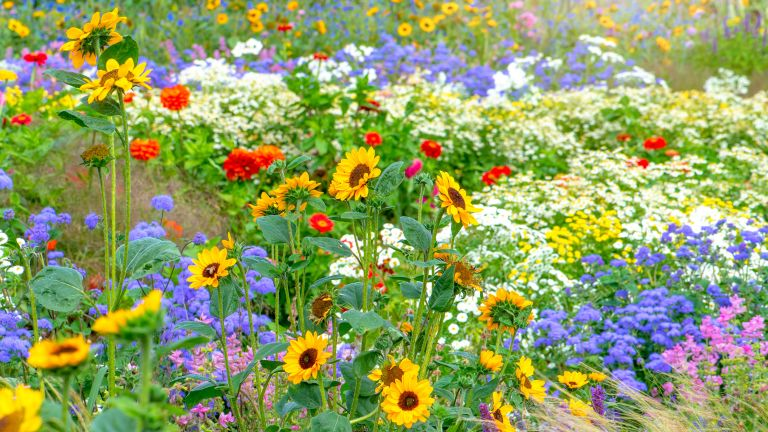sunflowers and other colorful summer plants