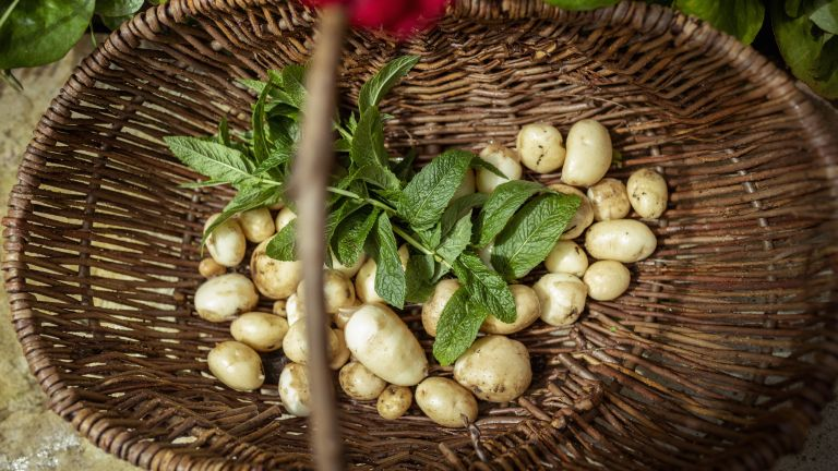 Monty Don's tip for planting new potatoes