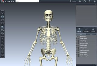 Biodigital human skeleton