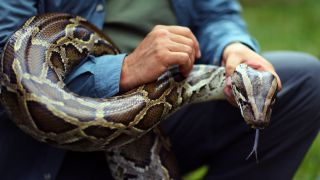 Jeff Fobb holds a Burmese python as he speaks to the media at the start of the 2013 Python Challenge in Davie, Florida.