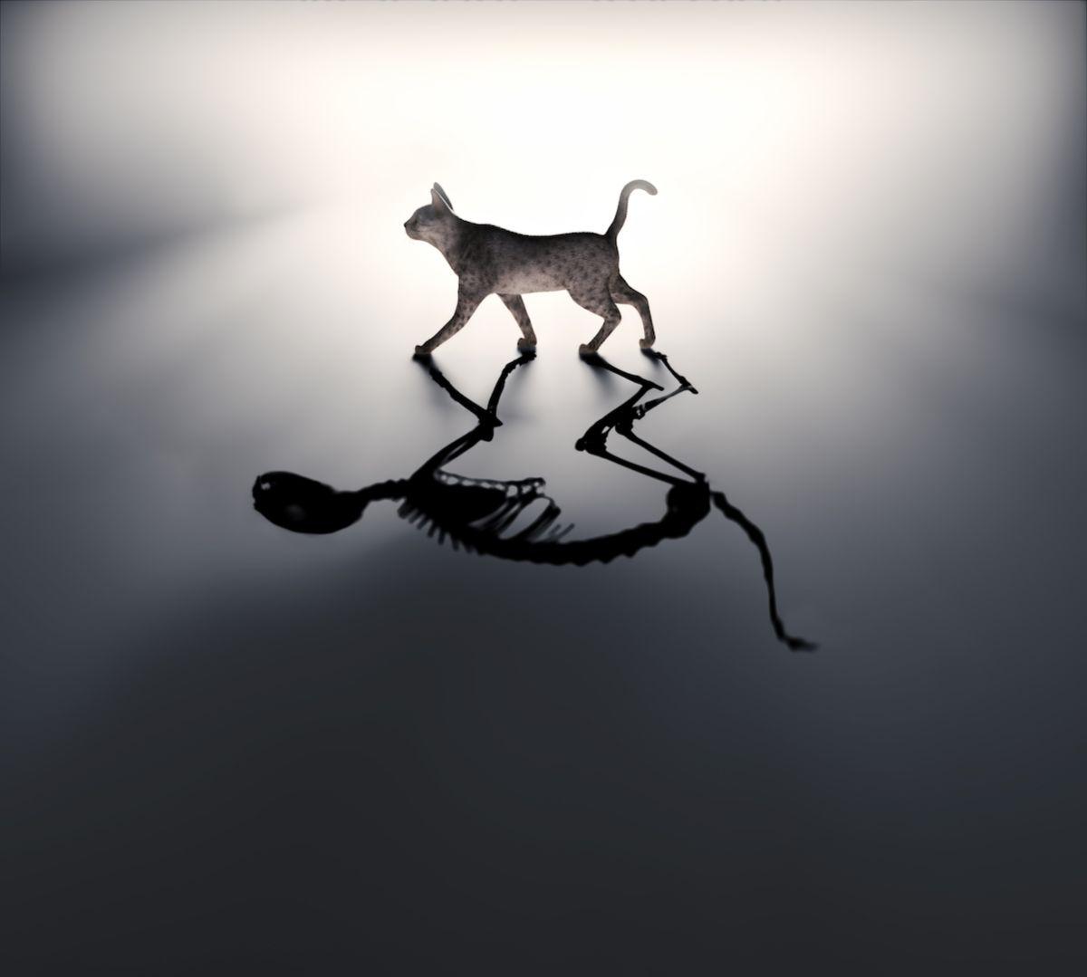 Schrödinger's cat: The favorite, misunderstood pet of quantum mechanics
