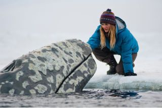 activism, whale rescue, Big Miracle Movie, Cindy Lowry