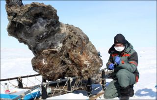 a mammoth fossil unearthed in Siberia