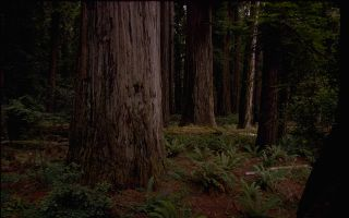 Redwood National Park wallpaper