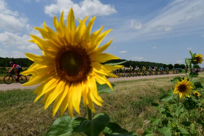 The Tour is not the Tour without some sunflowers