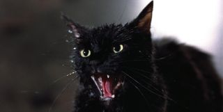 Tales From The Darkside: The Movie The Cat From Hell cat hisses at Drogan