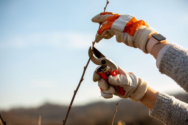 winter garden jobs: pruning