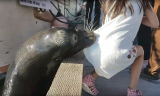 Sea lion pulls girl