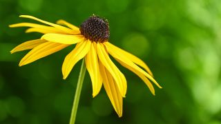 How to photograph flower close-ups in natural light