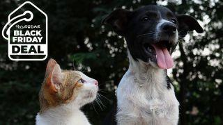 Cat looking at happy dog