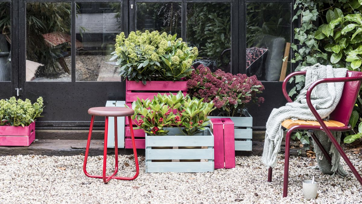 Best plants for winter pots: 14 bright ideas for cold-weather containers