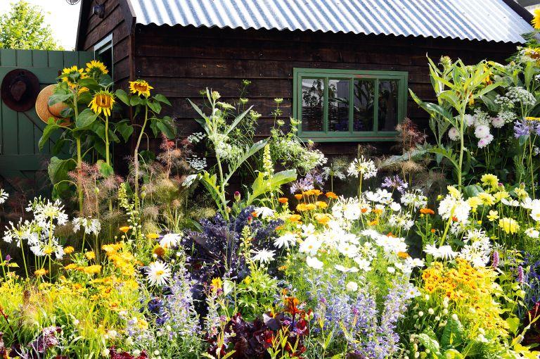 Bright cottage garden planting scheme in best cottage garden plants