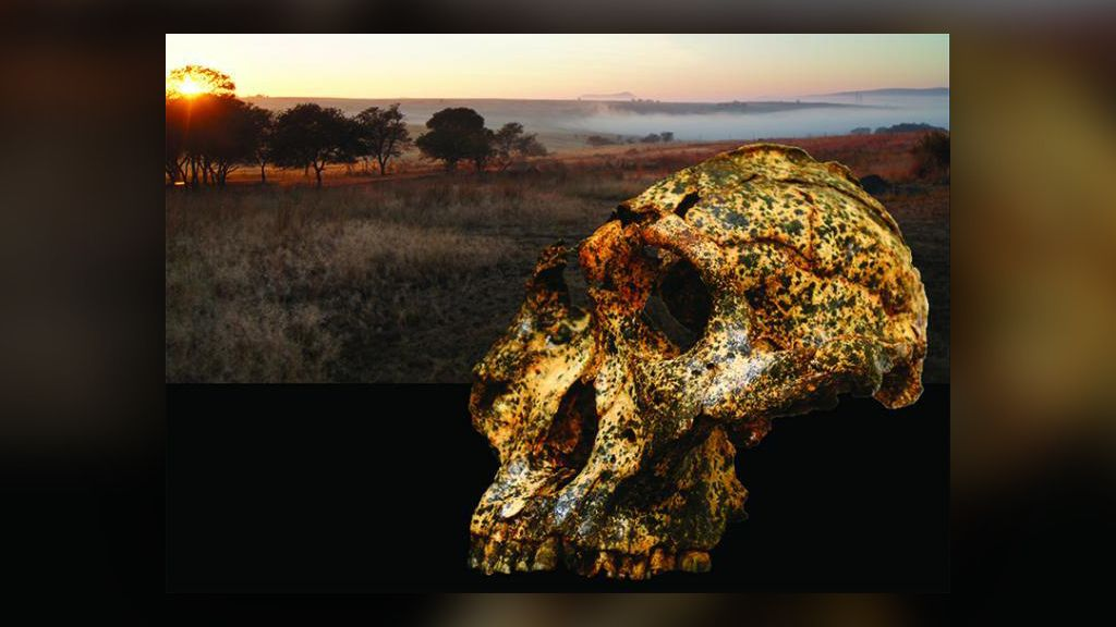 1st instance of microevolution in early human relative discovered