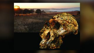 The extinct human relative Paranthropus robustus evolved rapidly during a turbulent time due to local climate change.