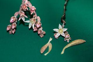 Jimi Hendriz plant