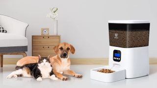 Are automatic feeders a good idea? Dog and cat sat inside next to a pet feeder