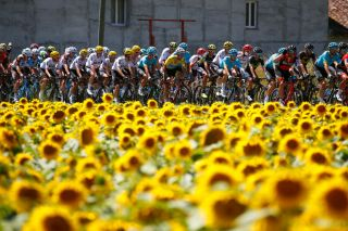 Sunflowers on stage 14 of the Tour de France