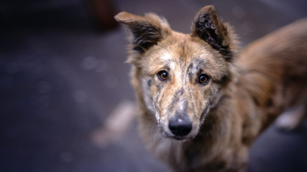 New study suggests COVID-19 hopped from dogs to humans. Here's why you should be skeptical.