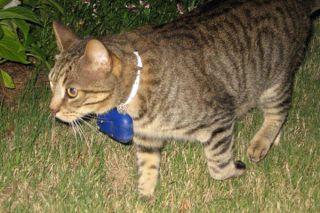 kittycam, felines, cats, hunting