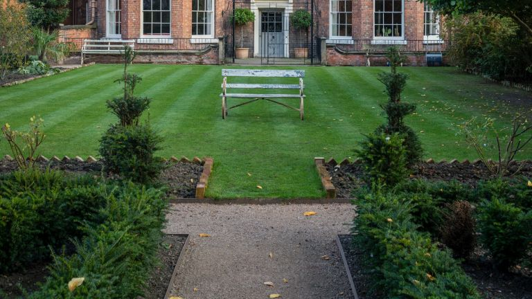 lawn with bench