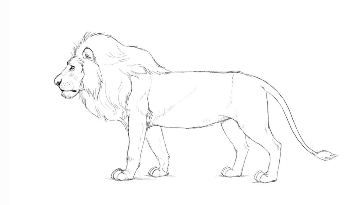 How To Draw A Lion Creative Bloq Line drawing of animals free download on clipartmag these pictures of this page are about:baby lion outline. how to draw a lion creative bloq