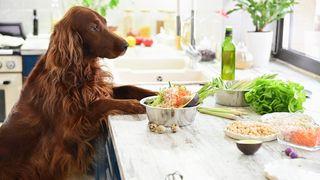 Can a dog be vegan?