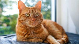 fortune-teller cat