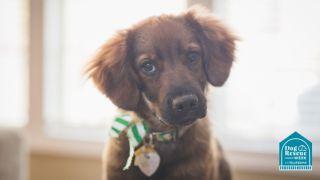 returning a rescue dog