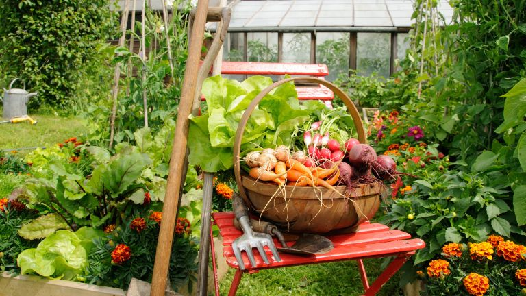 best vegetables to grow in raised beds in trug on chair in kitchen garden