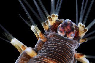 Marine Worm Dark-Field Microscopy