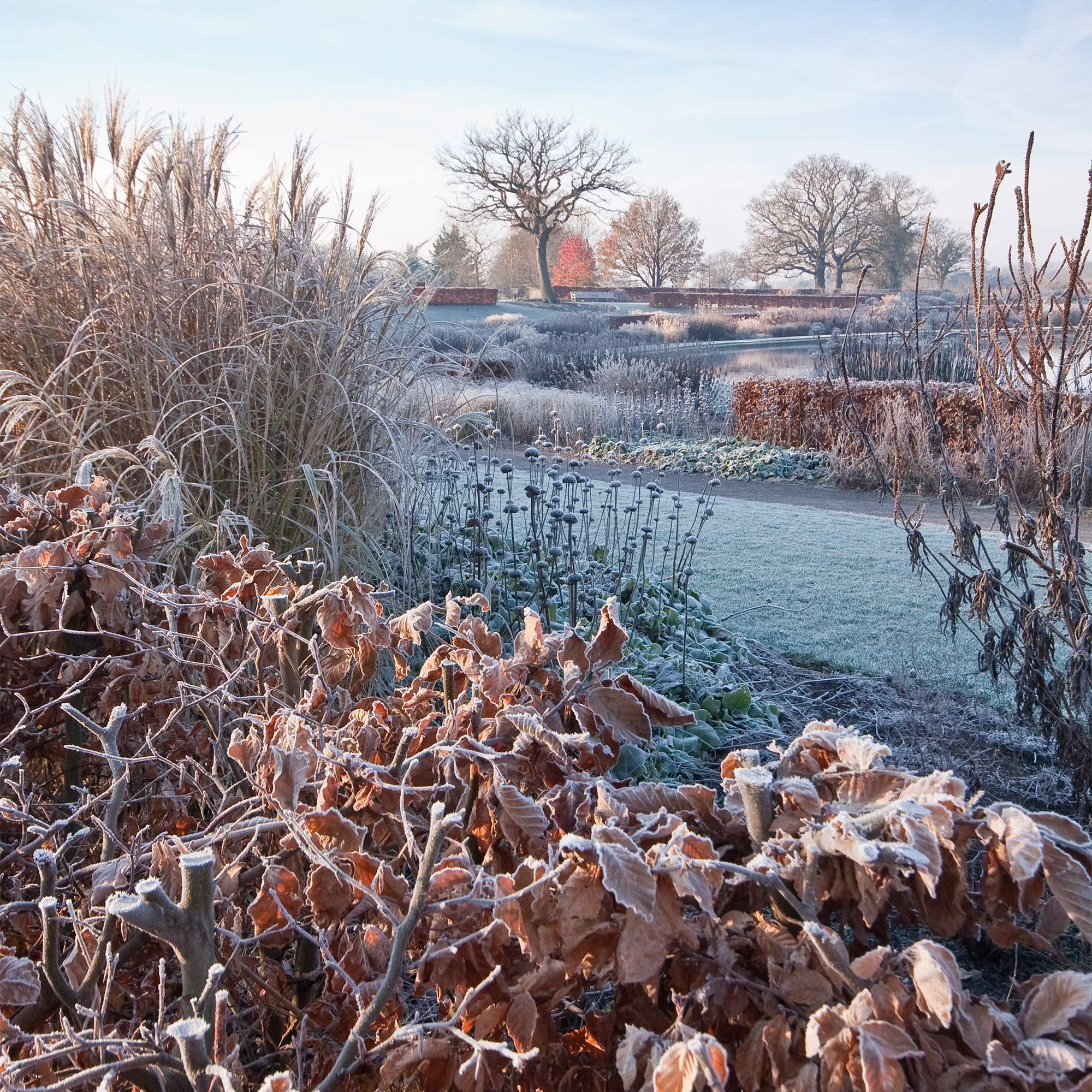 Winter-walks-cover-pic