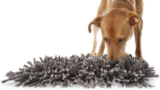 Dog with a snuffle mat