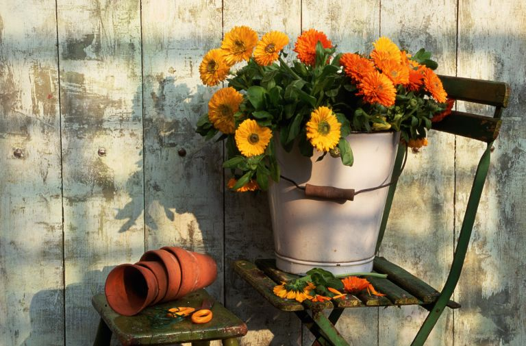 marigolds in a bucket on a chair