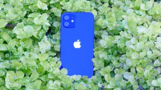 iPhone 12 on a leafy background