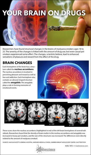 Areas of the brain affected by marijuana smoking.