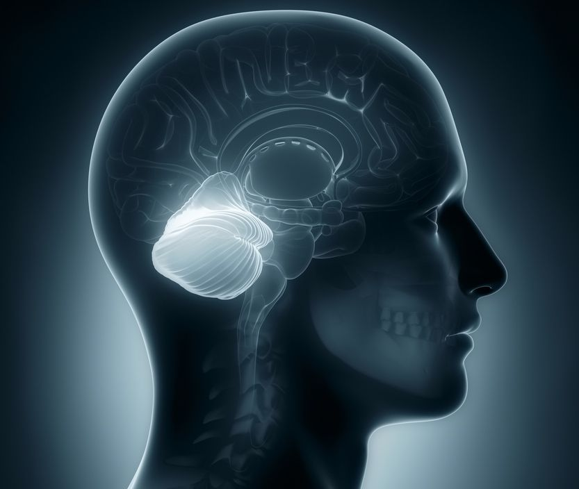 Does the Brain's Cerebellum Make Humans Special?   Live ...
