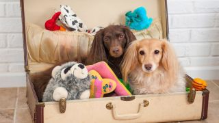 Dog toy storage ideas: two dachshund's sitting in a suitcase with toys around them
