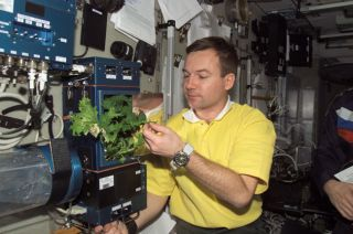 Space Station Harvest Relieves Crew's Minds, Appetites