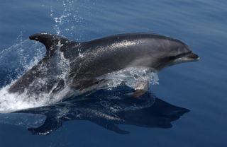 A bottlenose dolphin, dolphin stranding