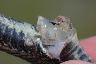 garter snake plug