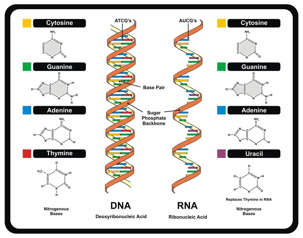 Dna Definition Structure Discovery What Is Dna Live Science
