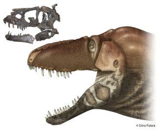 New tyrannosaur skull