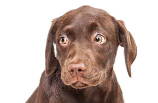 Don't Poo-Poo This: Why Dogs Feast on Feces   Live Science