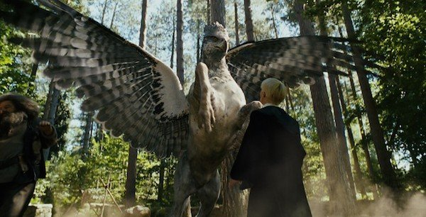 Harry Potter Spinoff Fantastic Beasts Could Be More Than ...