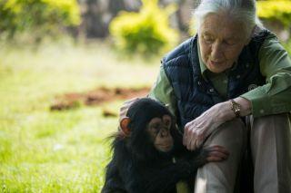 Jane Goodall visiting the Uganda Wildlife Education Centre in 2018.