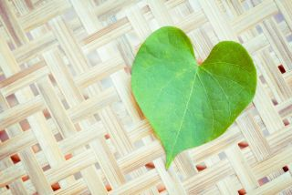 A green leaf in the shape of a heart.