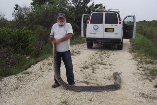 ravenous python