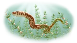 This image shows an artist's depiction of Parviraptor estesi, a snake that lived during the Upper Jurassic or Lower Cretaceous periods, swimming in a freshwater lake with snails and algae. The fossil of this snake was found in Purbeck Limestone, in Swanag