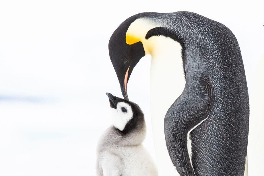 Penguins Meet the Family