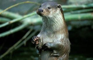 river-otter-england-110819-02